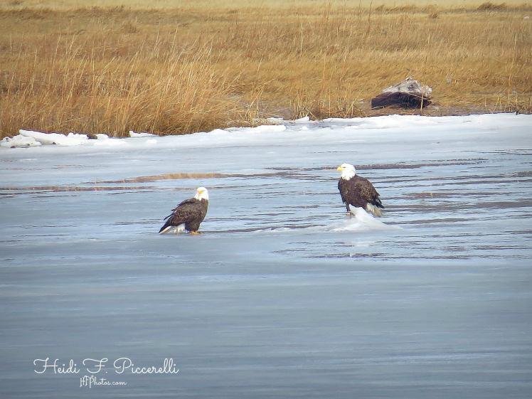 2 eagles 2.2.2014