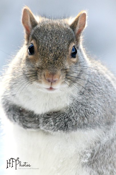 winter squirrel SM hfp